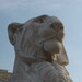 Lion Statue at Il Vittoriano
